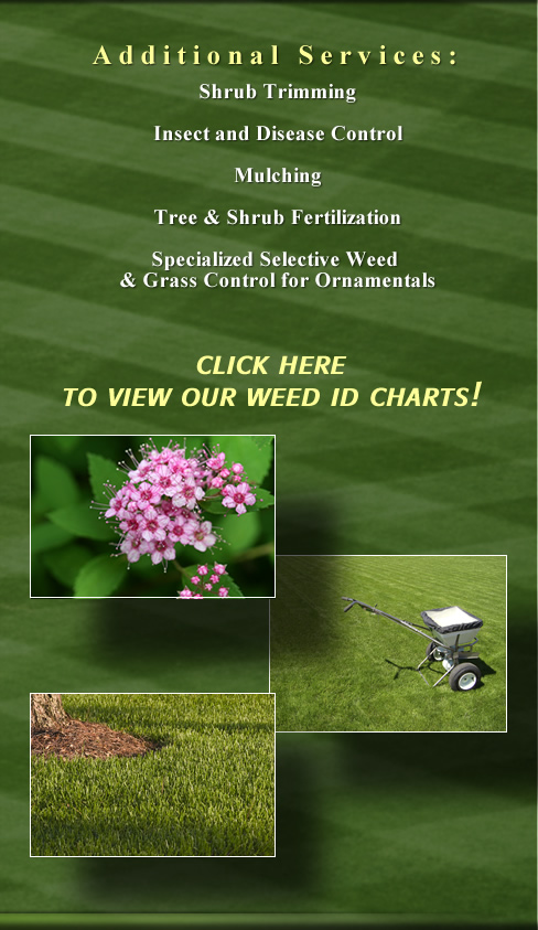 Prolawn Lawn Care Mowing Fertilization Gr Turf Weed Control Raleigh Cary Holly Springs Fuquay Varina Durham Triangle Yard